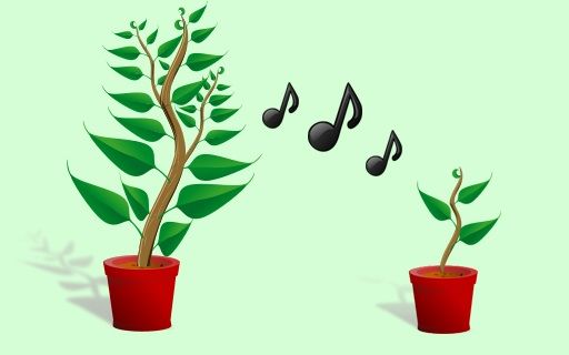 Music of the Plants – A Healing Sound