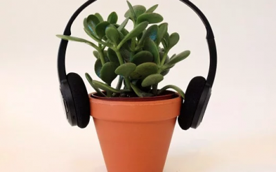 Glenn's Journey In The Noise and Plant Music Project