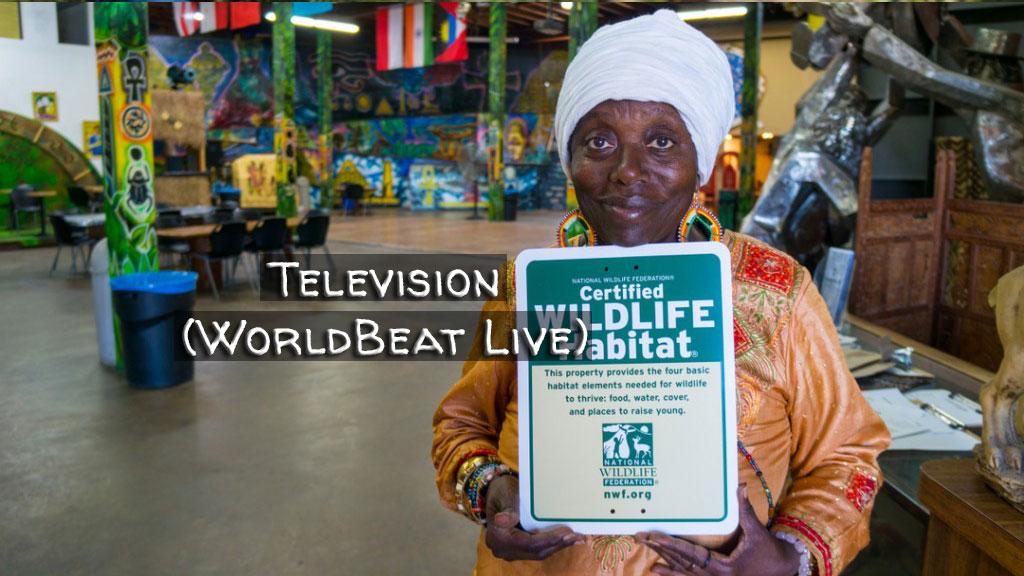 Television (WorldBeat Live)